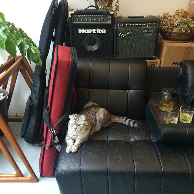 White Noise Records cat settles down for Damon & Naomi's soundcheck (Photo: <a href='https://www.instagram.com/p/--DtvOhOyp/'>Naomivision</a>)